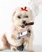 Psychodog